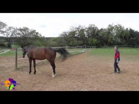 Biel McMillan - Trailer Doma Natural y Coaching Asistido con Caballos