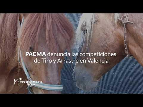 Tiro y Arrastre, otro caso de maltrato animal en Valencia