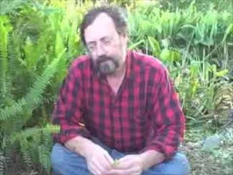"EatTheWeeds: Episode 02: ""ITEMIZING"" edible wild plants"