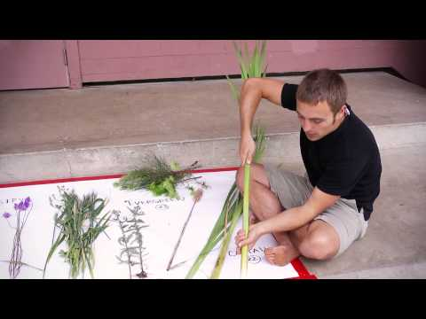 Wild Edibles with Sergei Boutenko (part 4 of 4)