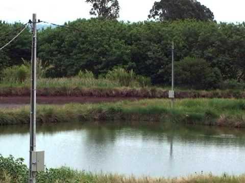 Piscicultura no norte do Paraná