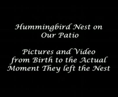 Nascimento-do-beija-florI