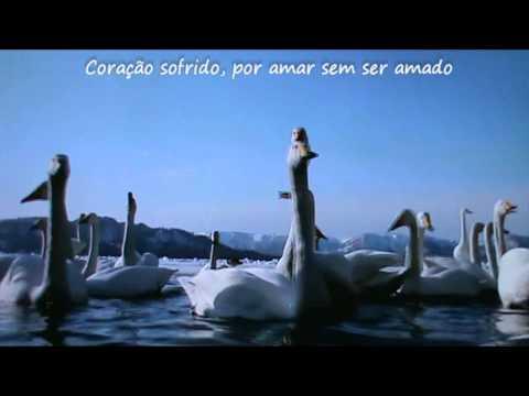 Roberto Carlos - Pássaro ferido