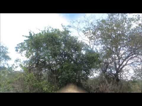 Agressão a Natureza - Caatinga