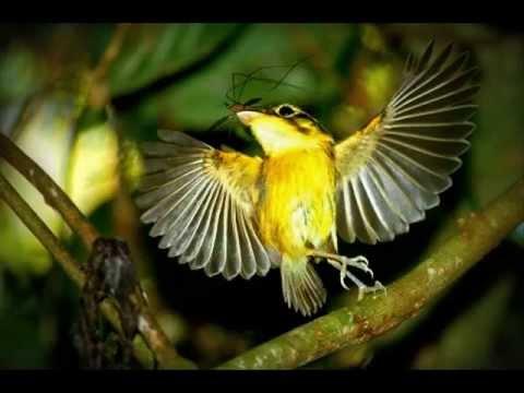 Avulsos - Se como um pássaro eu pudesse voar