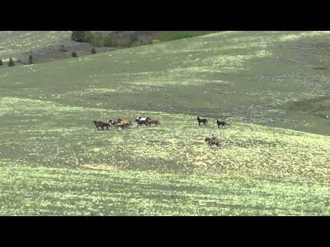 Tucker & Wild horses 1