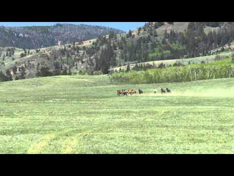 Tucker & wild horses 2