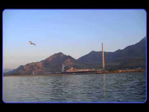 Neil Diamond | Seagulls and Sunsets | Windpoet
