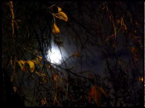 """""""Clair de lune intellectuel"""" de Émile Nelligan (lécture de poèmes/ Poetry reading)"""