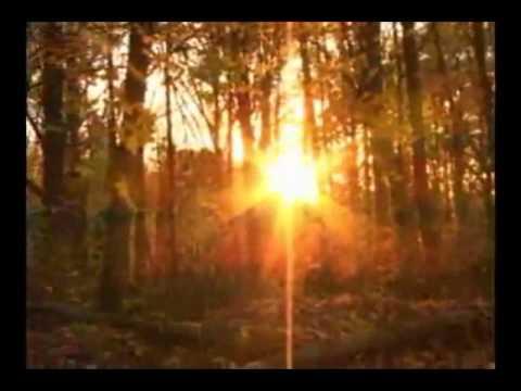Vrej de timp - Luminita Scotnotis