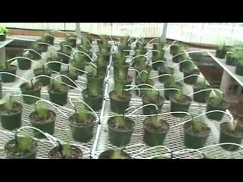 Automação de irrigação