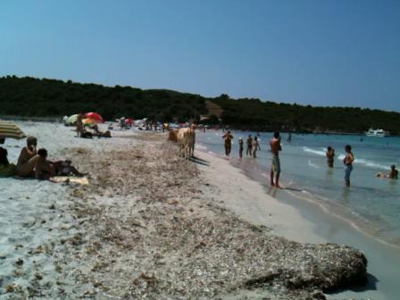 Муся и чего они делают на нашем пляже?
