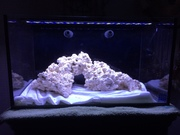 full tank shot of scape for jer :P