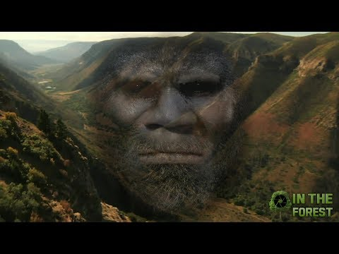 BIGFOOT In The Forest Documentary
