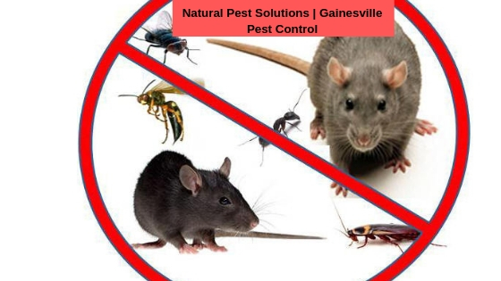 Natural Pest Solutions | Kamloops Pest Control