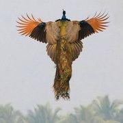 Raven J Pengraph