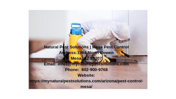 Natural Pest Solutions | Mesa Pest Control