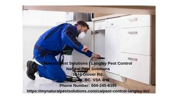 Natural Pest Solutions | Langley Pest Control