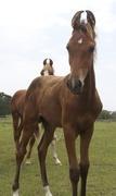 Francesca's Foals Martha's Vineyard 2011
