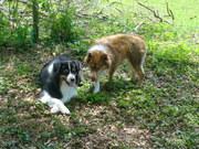 dogs et al