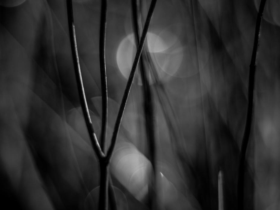 Abstract nature macro.....serie para la revista (adelanto)