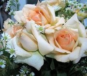 rosas champagne