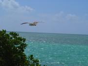 eagle-florida