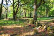 Natureza que fortalece a vida