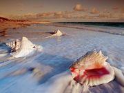 conchas & mar