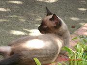 gatos 024