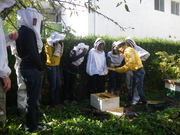 Beekeepers & Other Bee Enthusiasts Get-Together