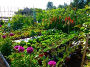 Community Garden Group in South Burnaby