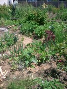 Building an Agriculturally Productive System