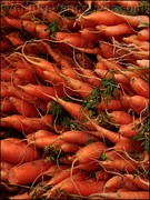 Organic Veggie Growing for Beginners