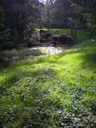How to Improve Wet Garden Zones