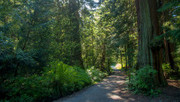 Big Trees Weekend: Tour The Giants