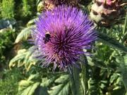 *Introduction to Organic Gardening