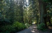 Nature Medicine Walk - An Introduction to an Ancient Practice