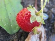 *Introduction to Organic Gardening (Free workshop)