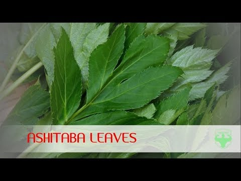 ashitaba | ashitaba leaves health benefits