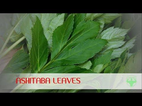 ashitaba | ashitaba leaves health benefits