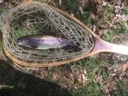 River Fishing 2019