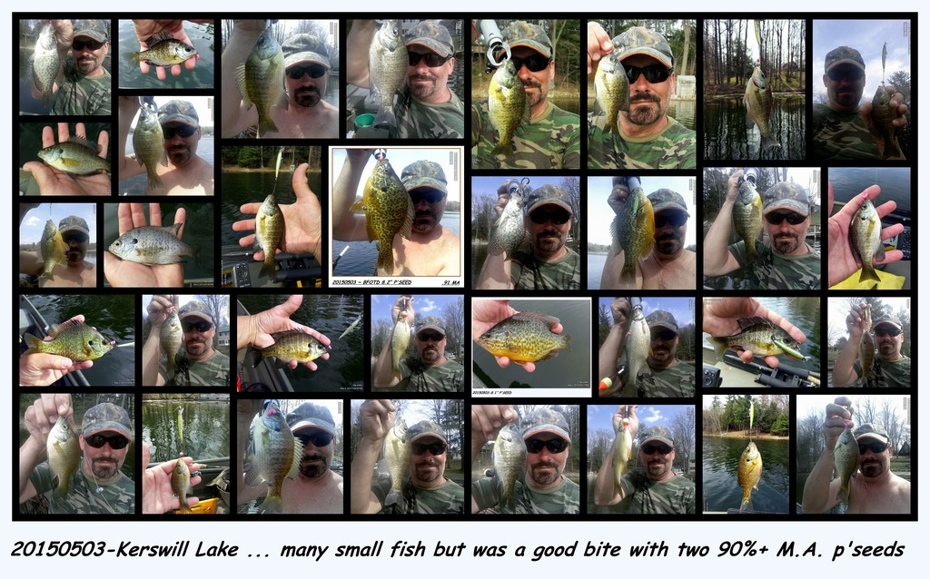 20150503-KERSWILL LAKE highlighting the bait dropper rig with Gulp Maggots