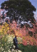 Canceled - The Theory and Practice of Masanobu Fukuoka's Natural Farming   ~   Instructor Larry Korn