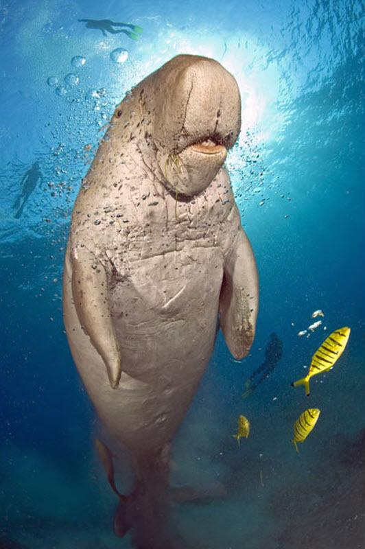 უცნაური ცხოველები, უჩინარი ცხოველები, გაუგონრი ცხოველები, უცნობი ცხოველები, თევზები, რეპტილიები, Qwelly, earth, დედამიწა, ცხოველები, ფლორა, ფაუნა, ამოუცნობი, დამალული