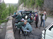 Yellowstone Lion Watchers