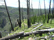 Osprey Falls Trail - Yellowstone Park