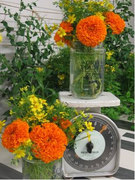 Edible Marigolds