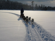 Sled Dog Trip in Northern Minnesota