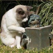 gatinho lendo
